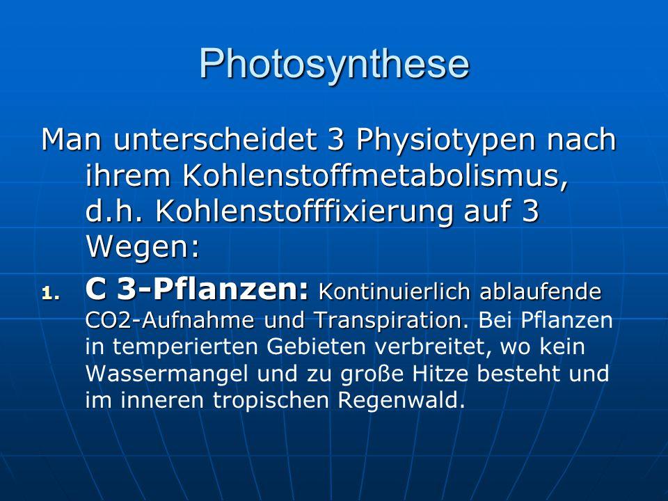 Photosynthese Man unterscheidet 3 Physiotypen nach ihrem Kohlenstoffmetabolismus, d.h. Kohlenstofffixierung auf 3 Wegen: