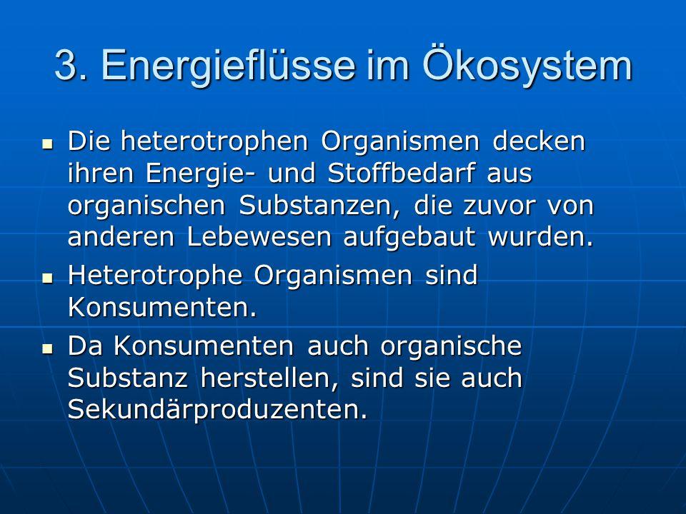 3. Energieflüsse im Ökosystem