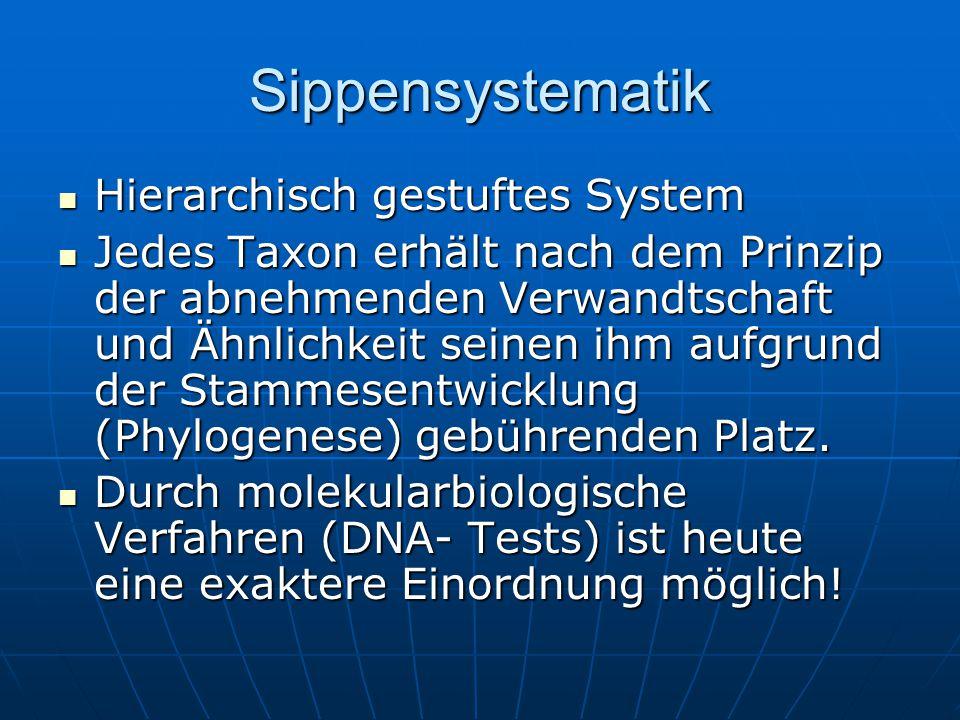 Sippensystematik Hierarchisch gestuftes System