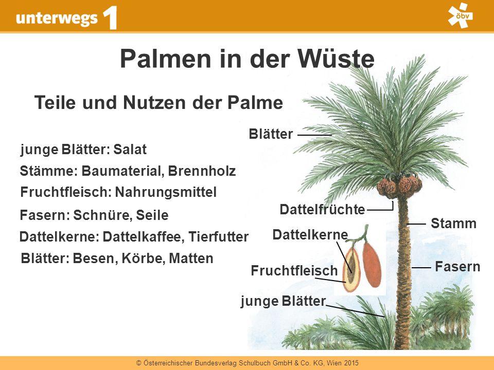 Teile und Nutzen der Palme