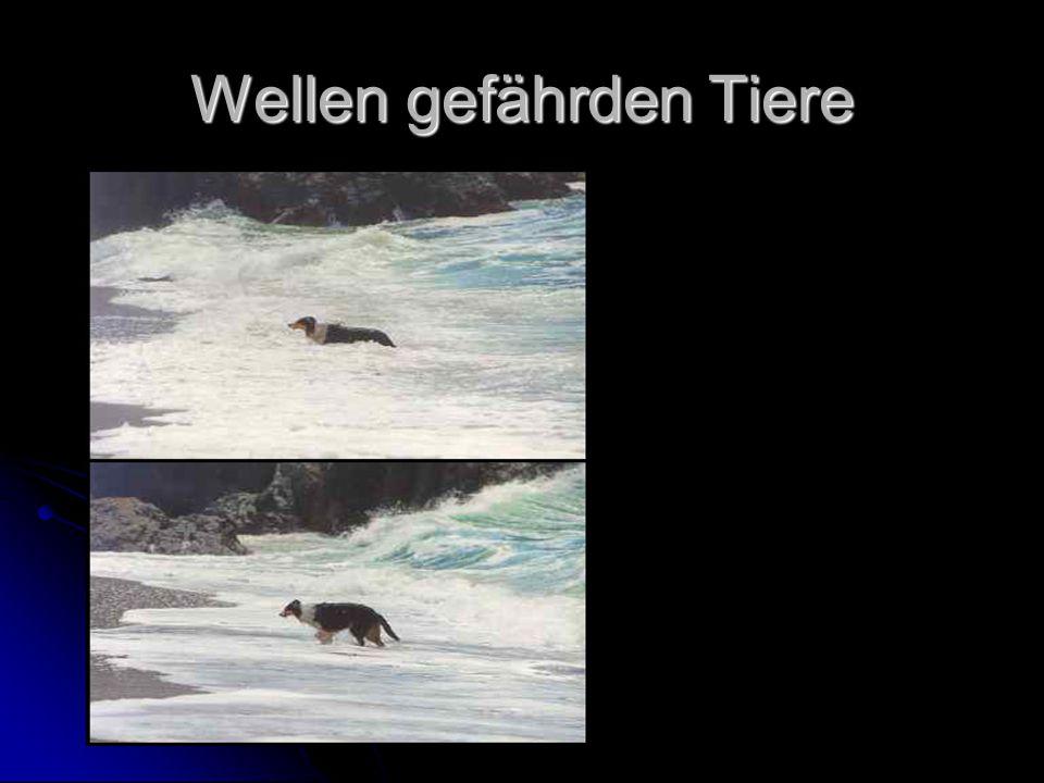Wellen gefährden Tiere