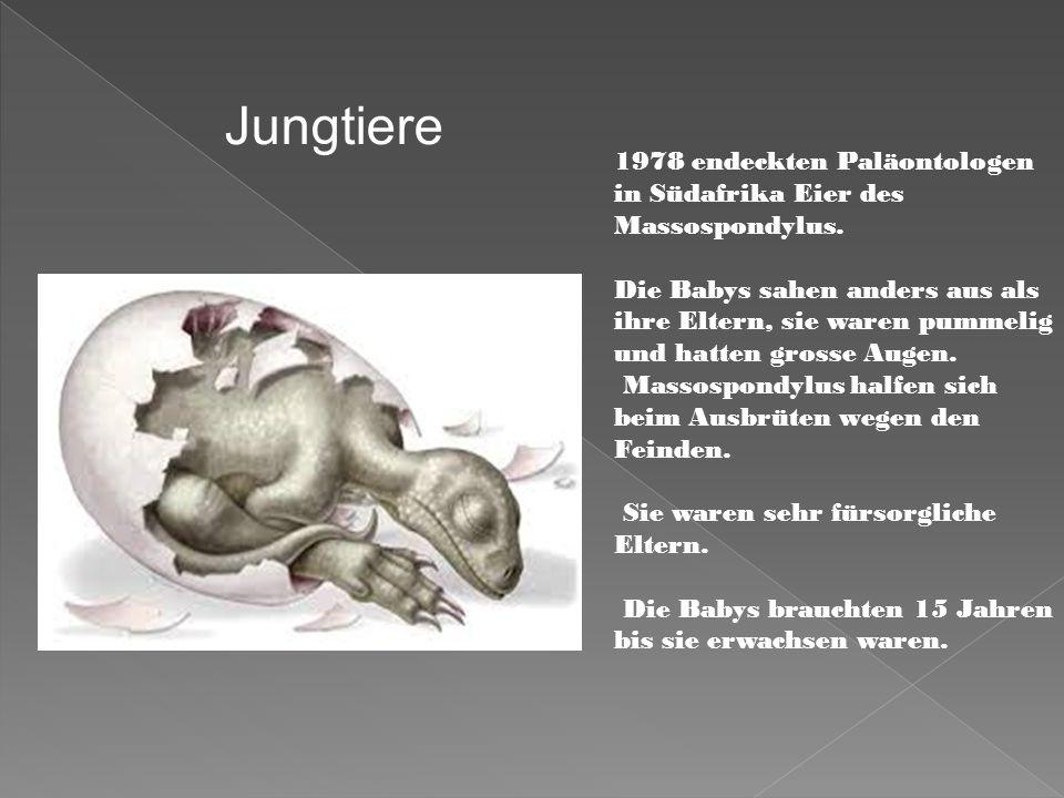 Jungtiere 1978 endeckten Paläontologen in Südafrika Eier des Massospondylus.
