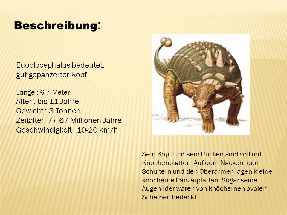 Beschreibung: Euoplocephalus bedeutet: gut gepanzerter Kopf.