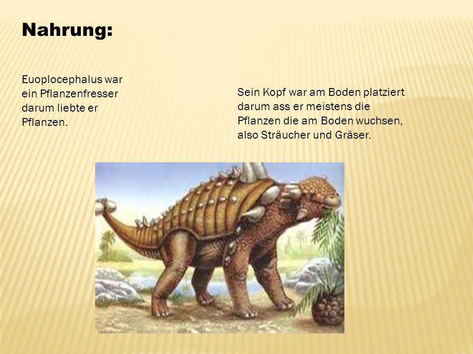 Nahrung: Euoplocephalus war ein Pflanzenfresser darum liebte er Pflanzen.