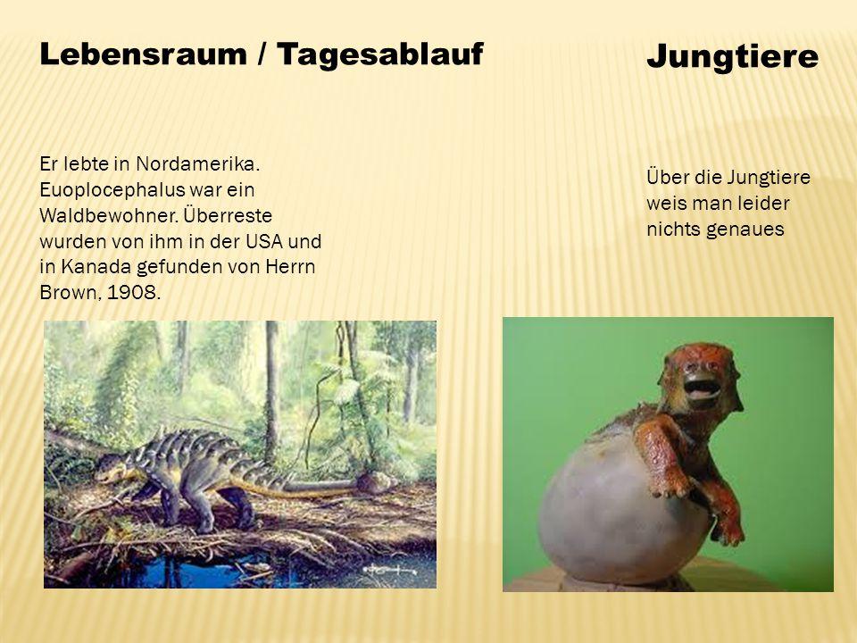 Jungtiere Lebensraum / Tagesablauf