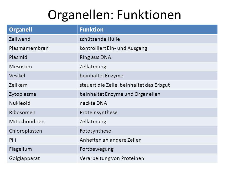 Organellen: Funktionen