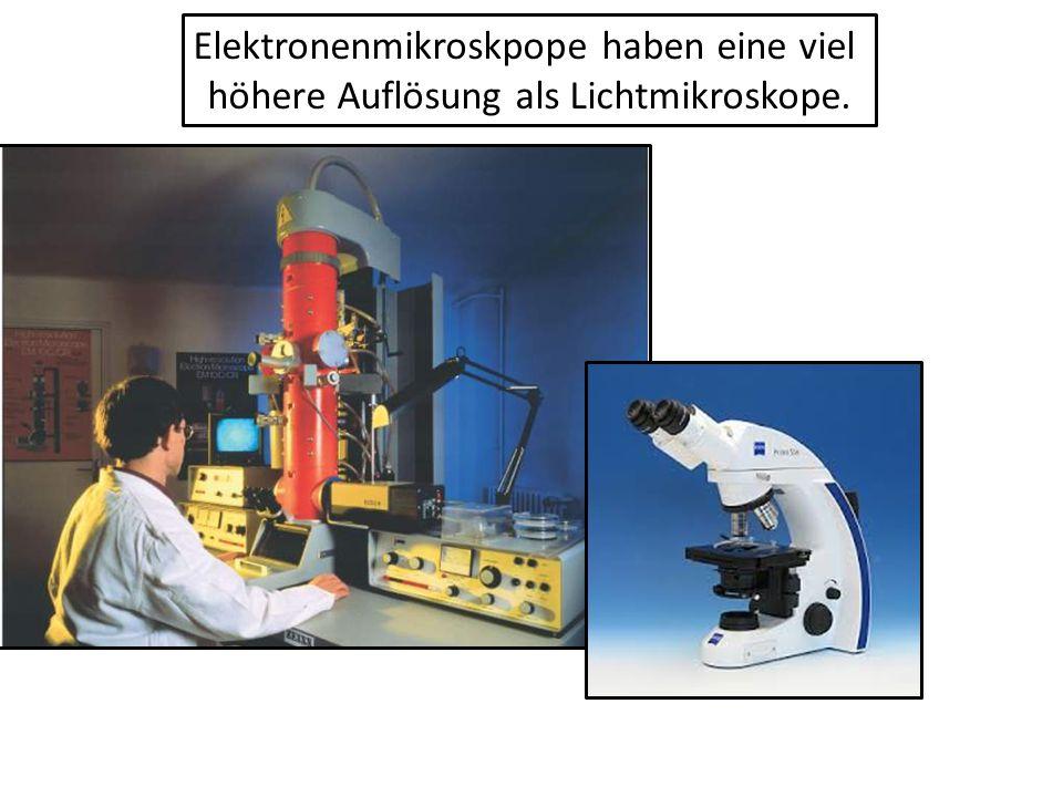Elektronenmikroskpope haben eine viel