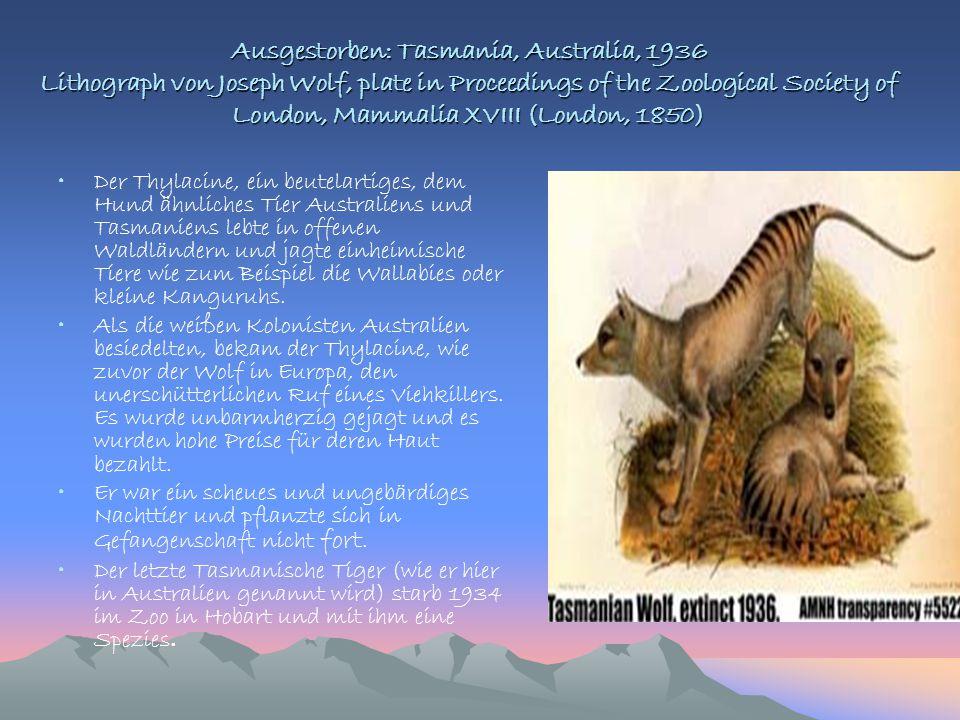 Ausgestorben: Tasmania, Australia, 1936 Lithograph von Joseph Wolf, plate in Proceedings of the Zoological Society of London, Mammalia XVIII (London, 1850)