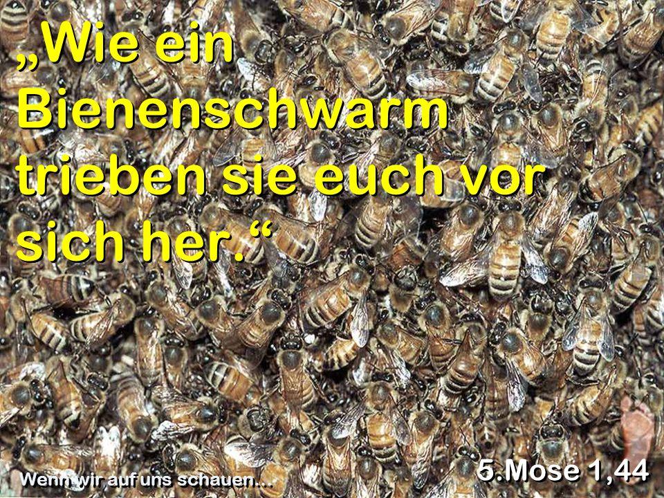 """""""Wie ein Bienenschwarm trieben sie euch vor sich her."""