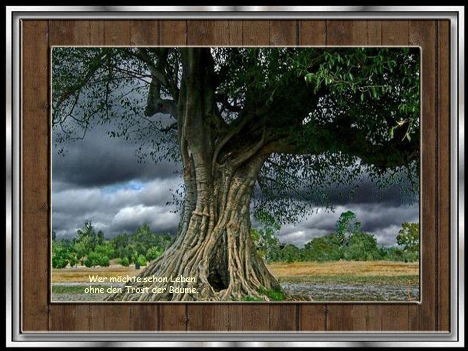 Wer möchte schon Leben ohne den Trost der Bäume.