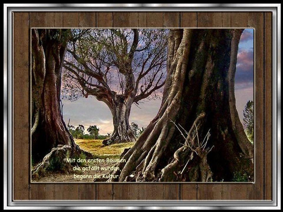 Mit den ersten Bäumen, die gefällt wurden, begann die Kultur.