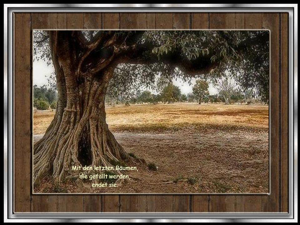 Mit den letzten Bäumen, die gefällt werden, endet sie.