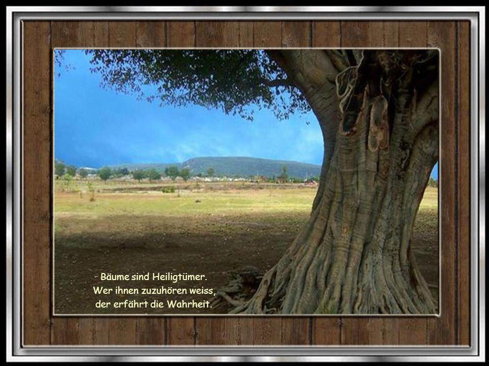 Bäume sind Heiligtümer. Wer ihnen zuzuhören weiss,