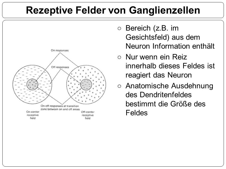 Rezeptive Felder von Ganglienzellen