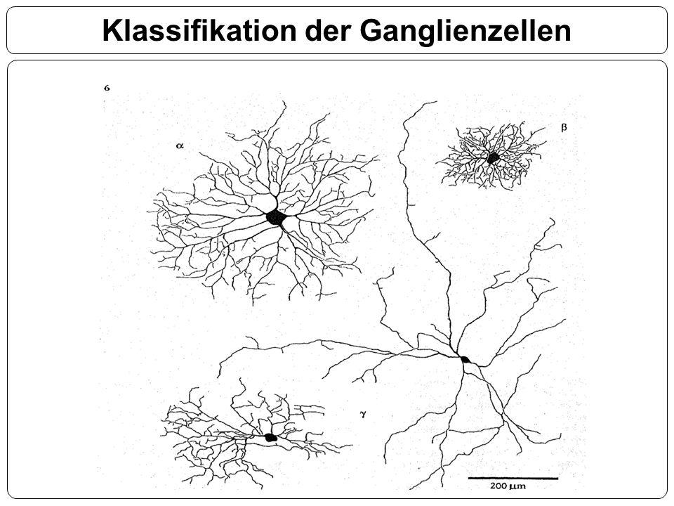 Klassifikation der Ganglienzellen