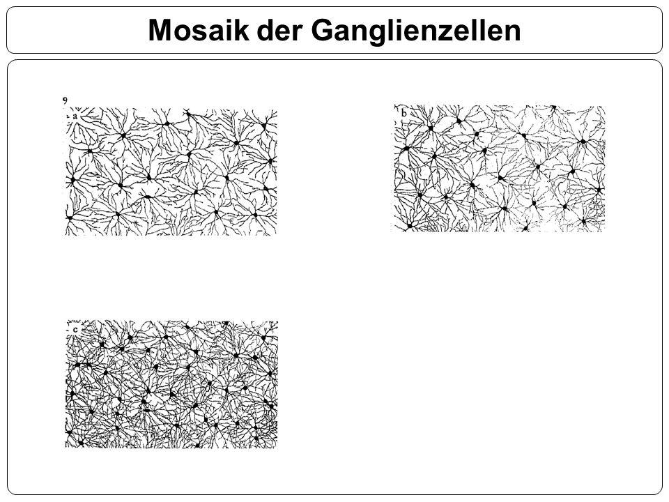 Mosaik der Ganglienzellen