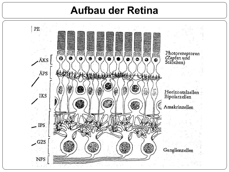 Aufbau der Retina