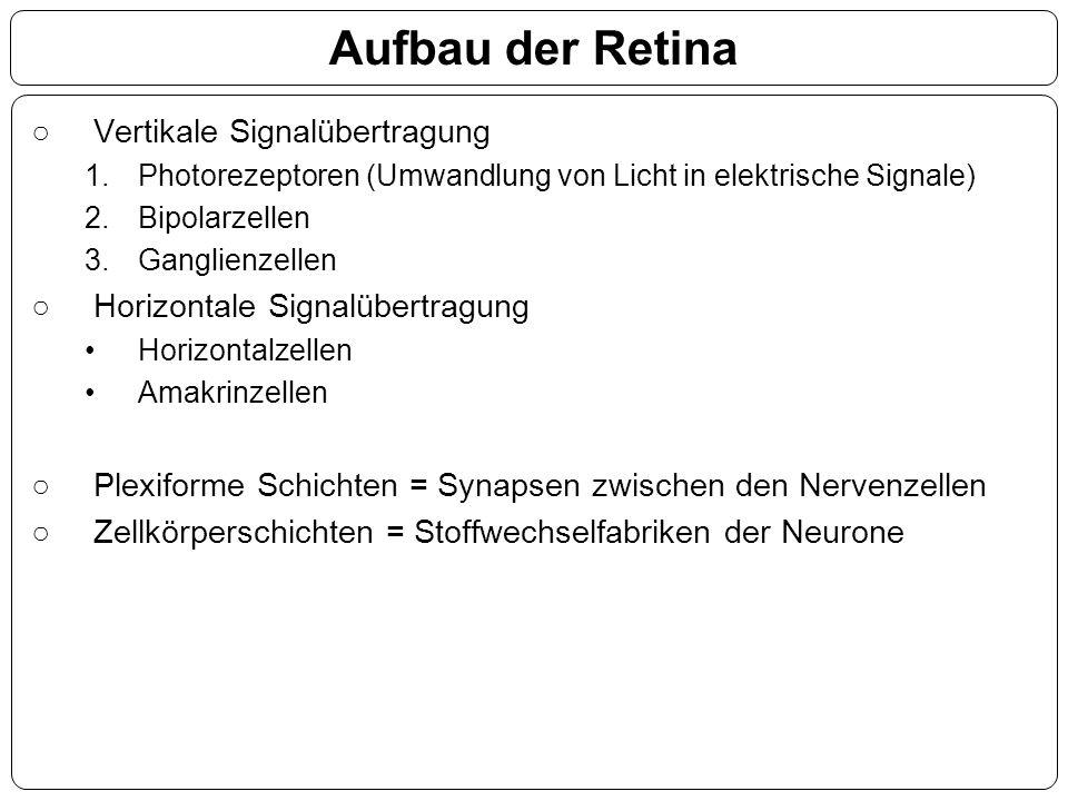 Aufbau der Retina Vertikale Signalübertragung