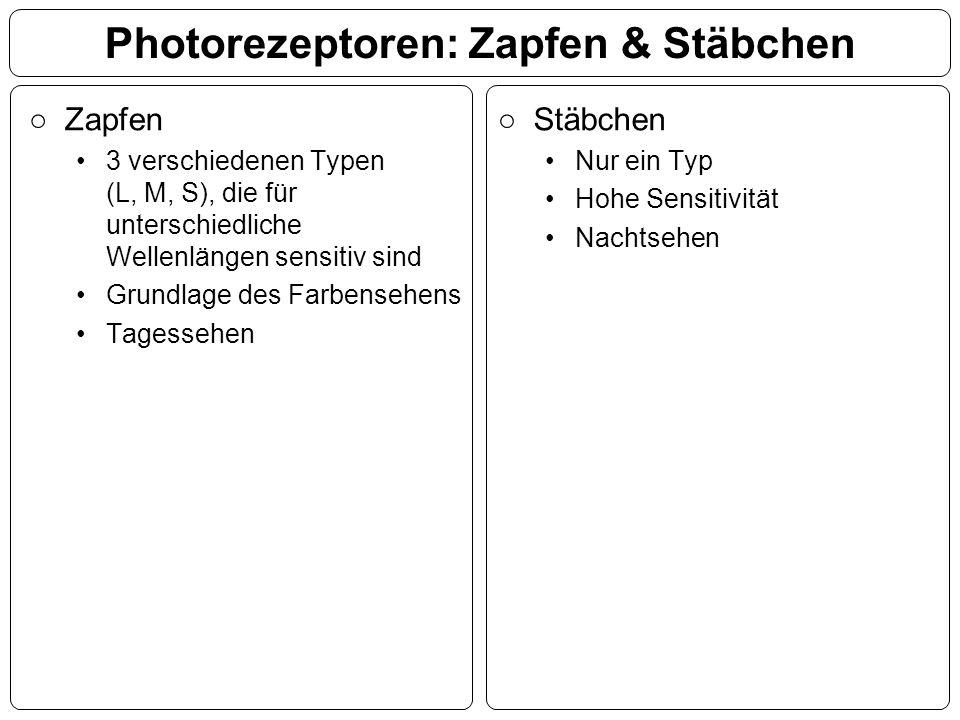 Photorezeptoren: Zapfen & Stäbchen