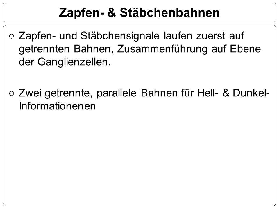 Zapfen- & Stäbchenbahnen