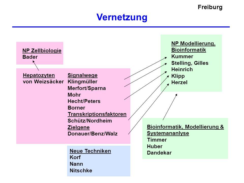 Vernetzung Freiburg NP Modellierung, Bioinformatik Kummer