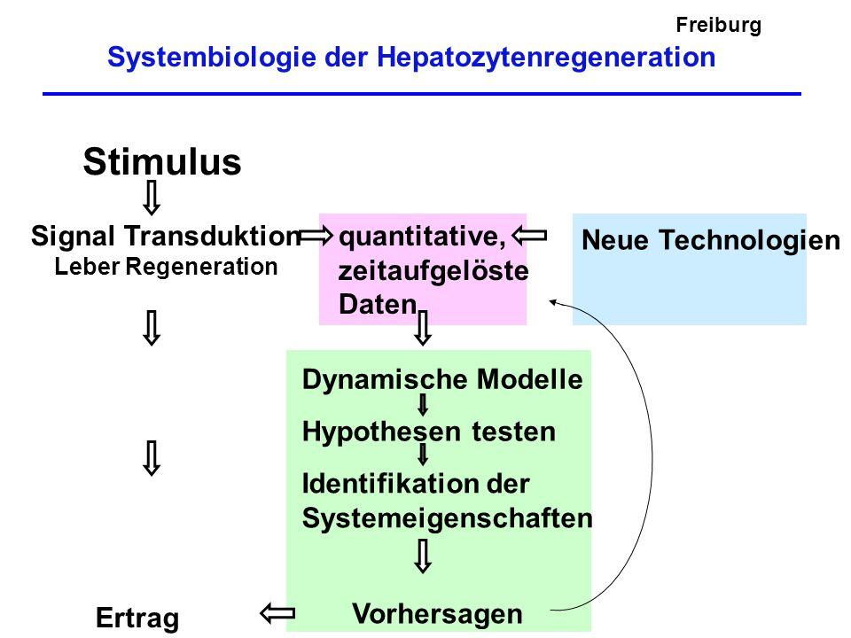 Systembiologie der Hepatozytenregeneration