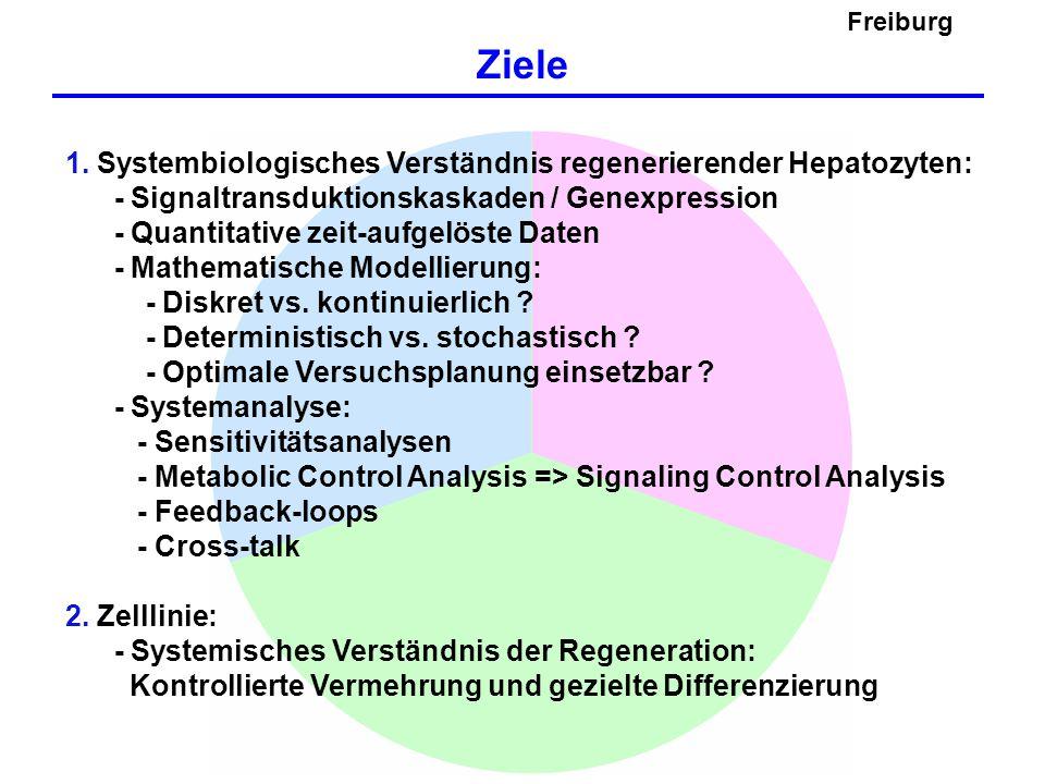 Freiburg Ziele. 1. Systembiologisches Verständnis regenerierender Hepatozyten: - Signaltransduktionskaskaden / Genexpression.