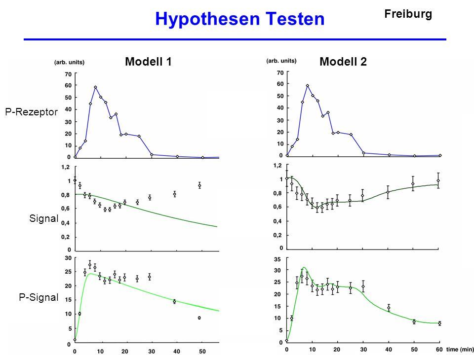 Hypothesen Testen Freiburg Modell 1 Modell 2 P-Rezeptor Signal