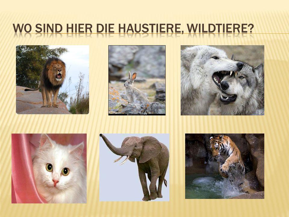 Wo sind hier die Haustiere, Wildtiere