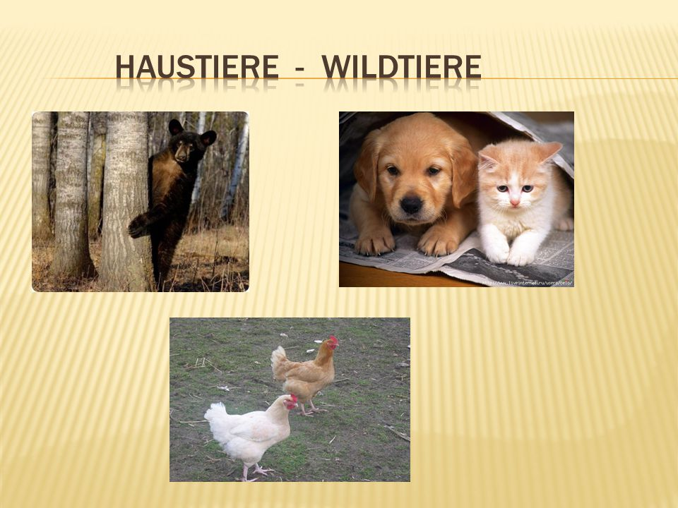 Haustiere - wildtiere