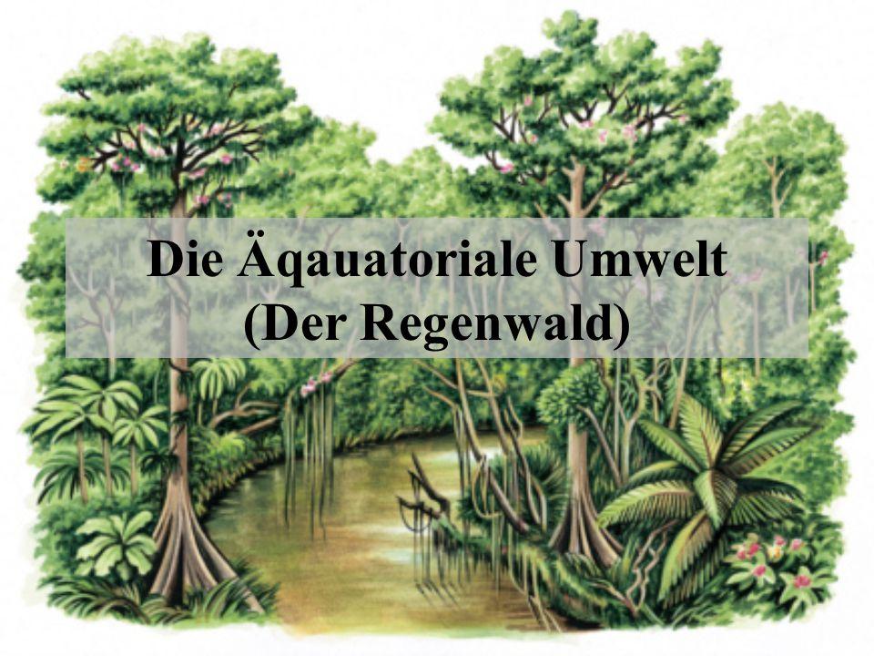 Die Äqauatoriale Umwelt (Der Regenwald)