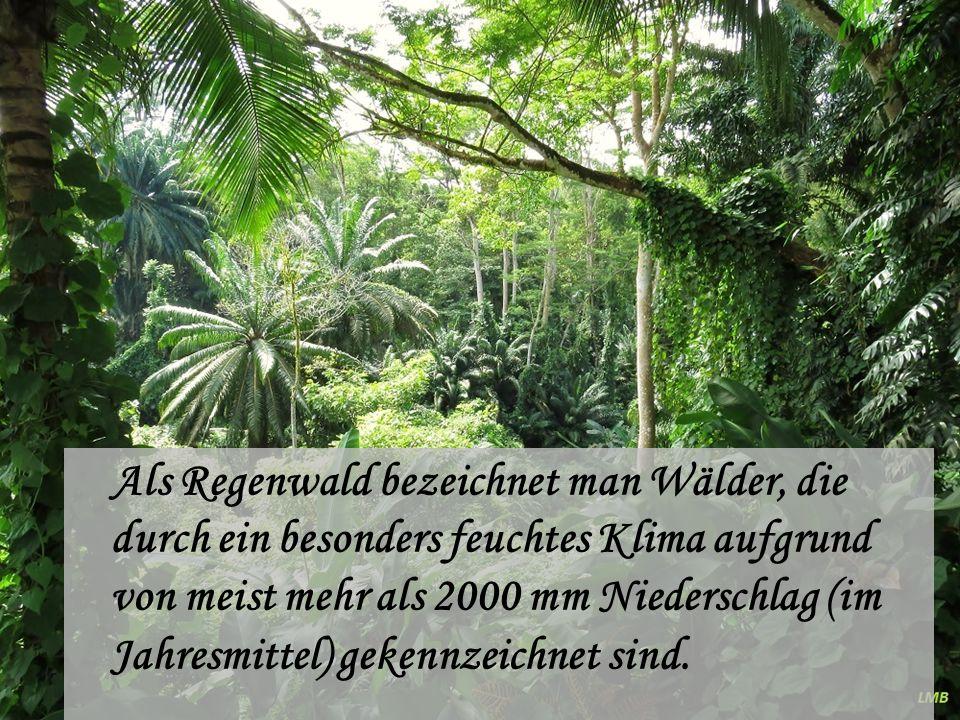 Als Regenwald bezeichnet man Wälder, die durch ein besonders feuchtes Klima aufgrund von meist mehr als 2000 mm Niederschlag (im Jahresmittel) gekennzeichnet sind.