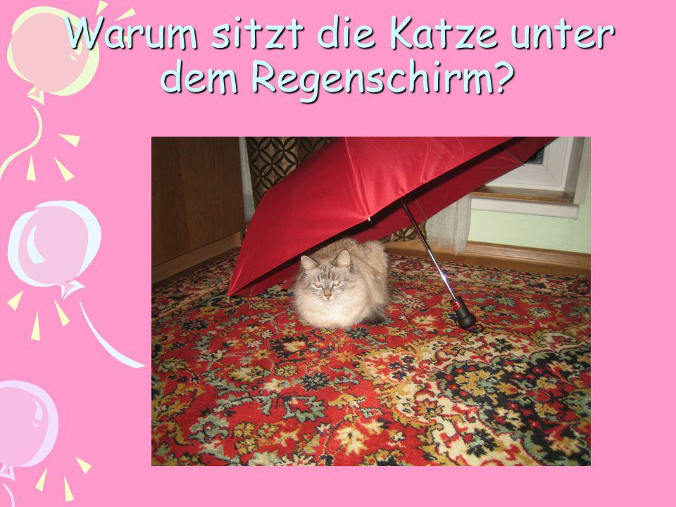 Warum sitzt die Katze unter dem Regenschirm