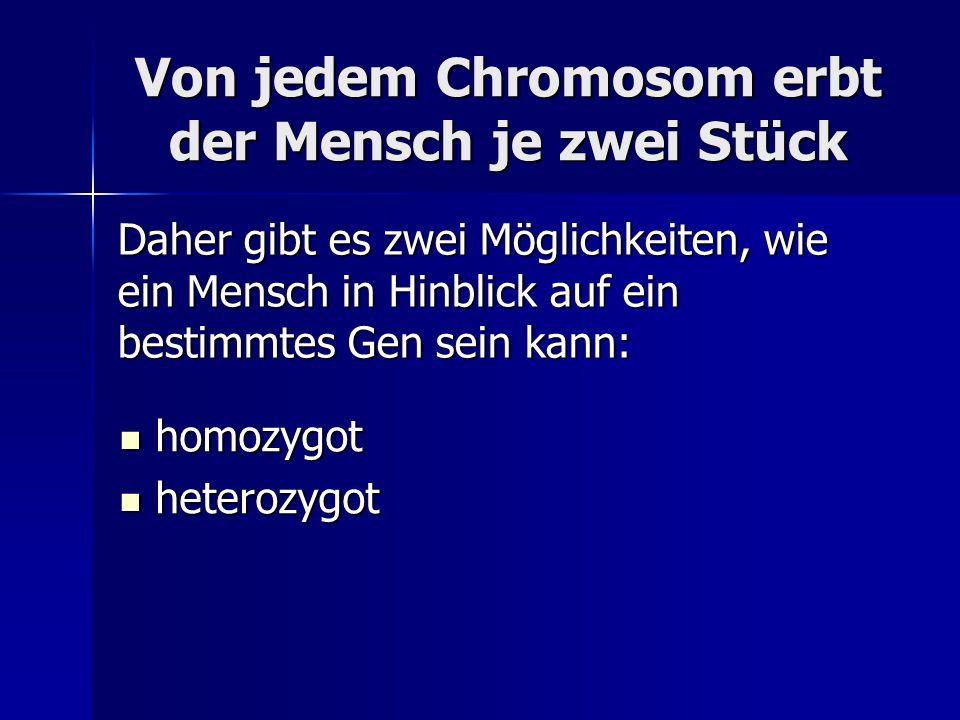 Von jedem Chromosom erbt der Mensch je zwei Stück