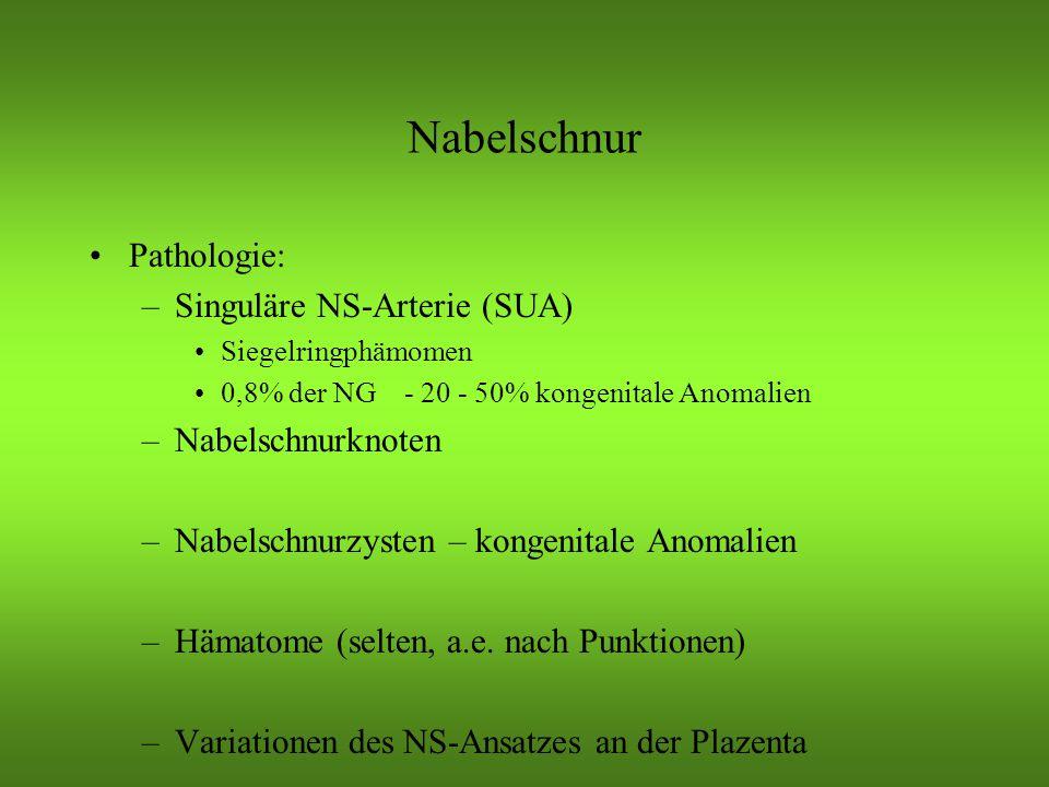 Nabelschnur Pathologie: Singuläre NS-Arterie (SUA) Nabelschnurknoten
