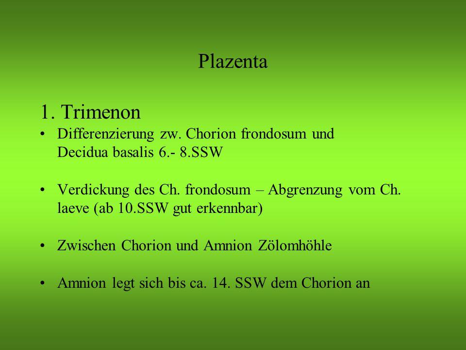 Plazenta 1. Trimenon Differenzierung zw. Chorion frondosum und