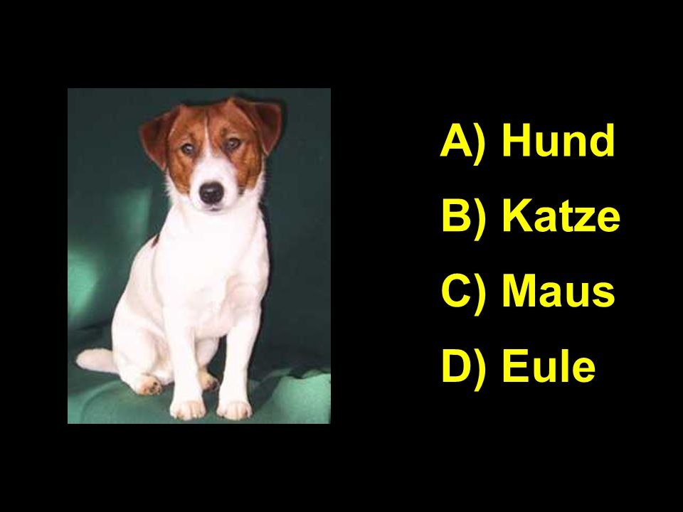 A A) Hund B) Katze C) Maus D) Eule