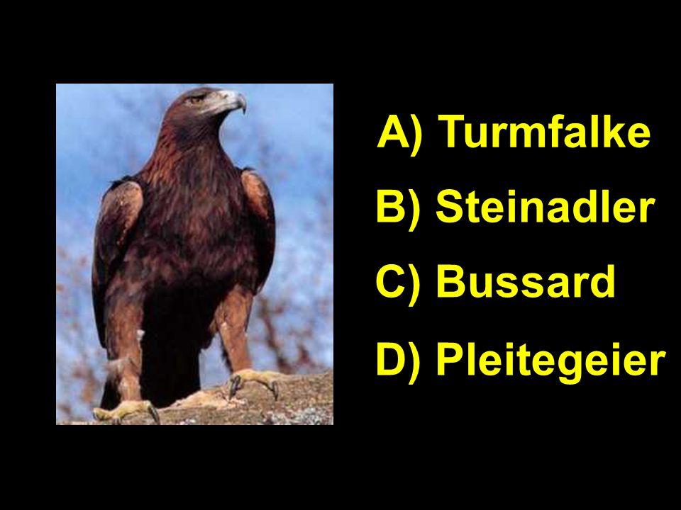A A) Turmfalke B) Steinadler C) Bussard D) Pleitegeier