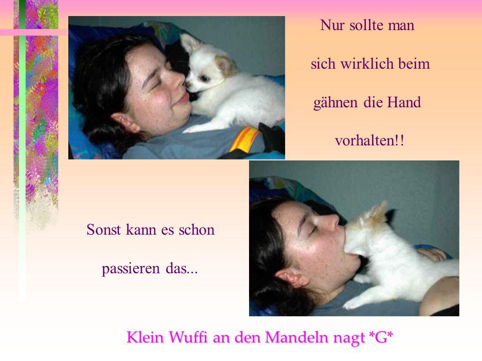 Klein Wuffi an den Mandeln nagt *G*