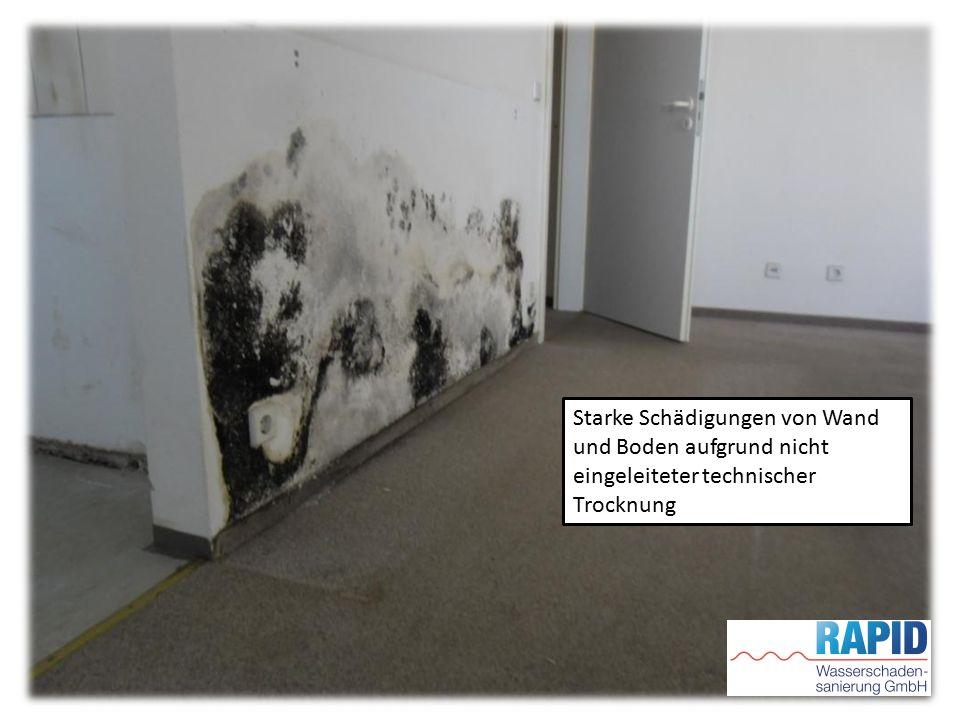 Starke Schädigungen von Wand und Boden aufgrund nicht eingeleiteter technischer Trocknung