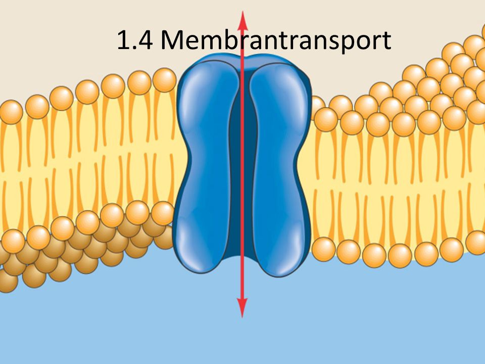 1.4 Membrantransport
