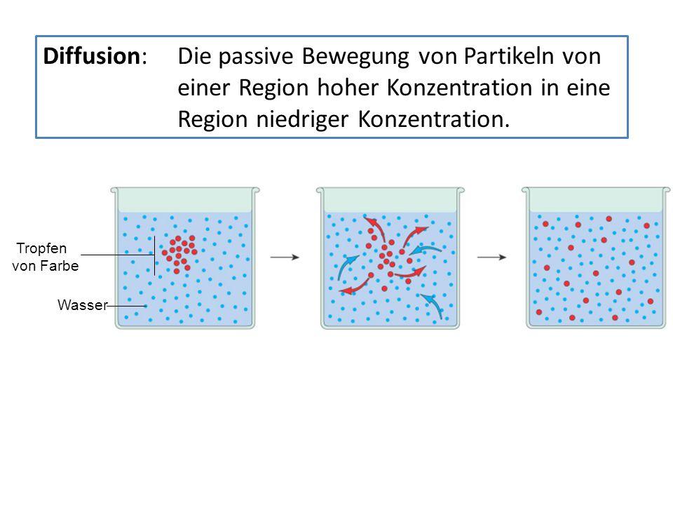 Diffusion: Die passive Bewegung von Partikeln von