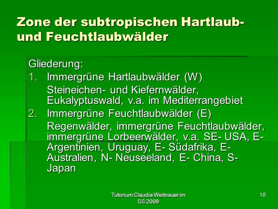 Zone der subtropischen Hartlaub- und Feuchtlaubwälder