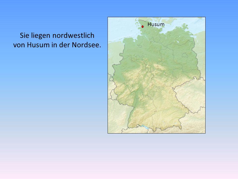 Sie liegen nordwestlich von Husum in der Nordsee.