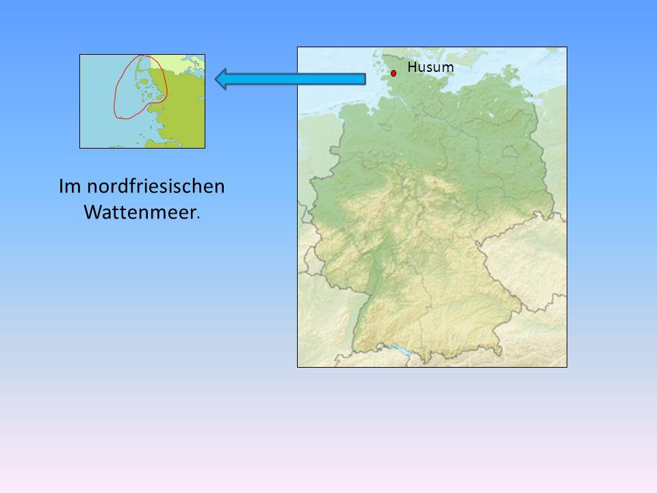 Im nordfriesischen Wattenmeer.