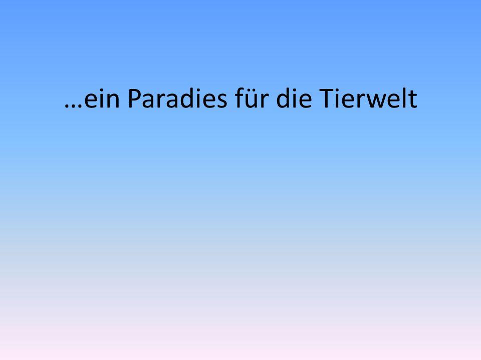 …ein Paradies für die Tierwelt