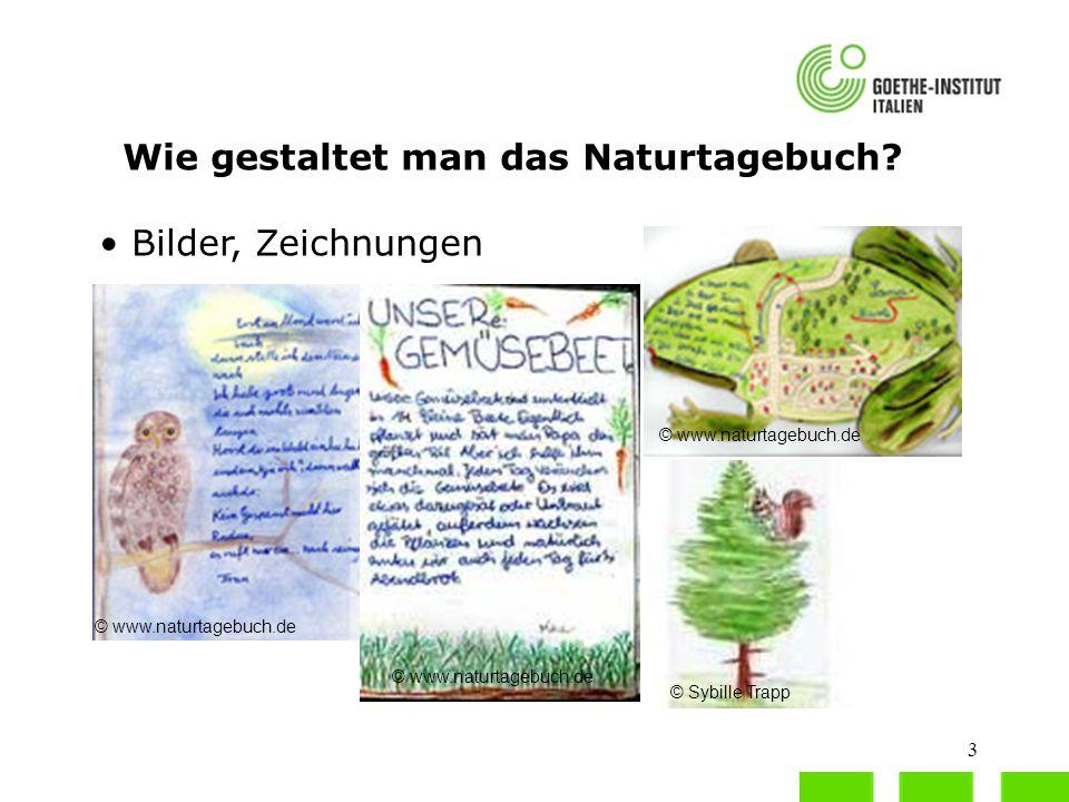 Wie gestaltet man das Naturtagebuch
