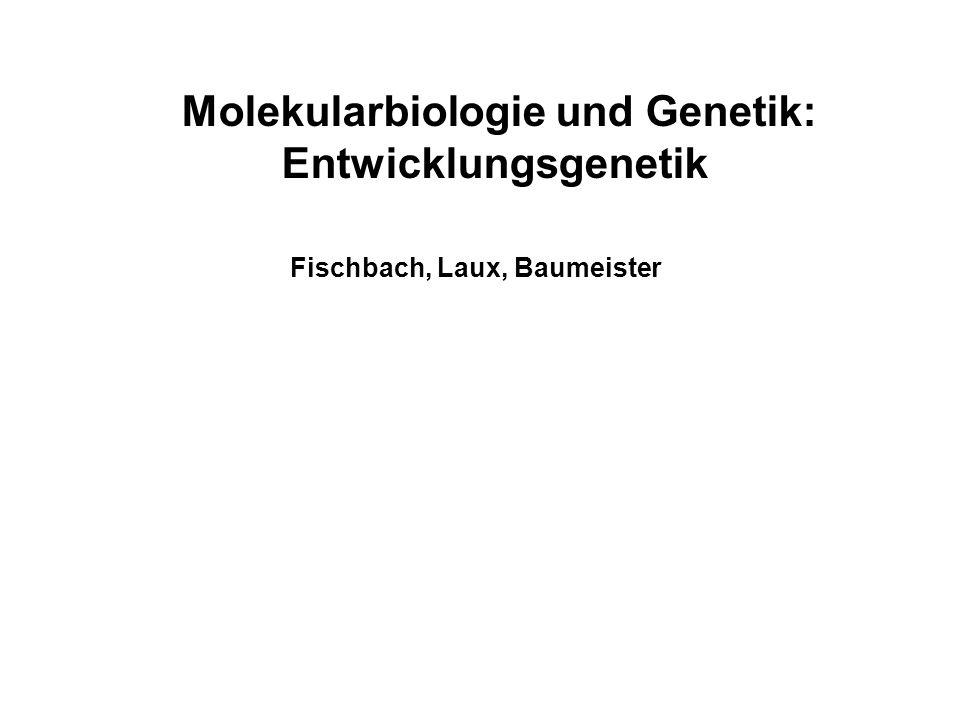 Molekularbiologie und Genetik: