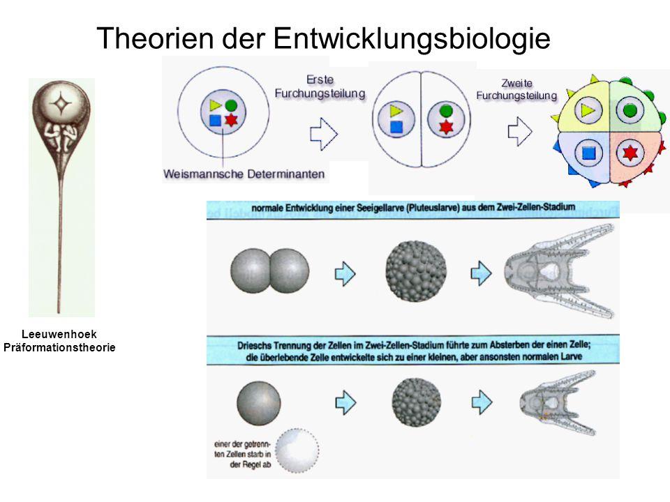 Theorien der Entwicklungsbiologie