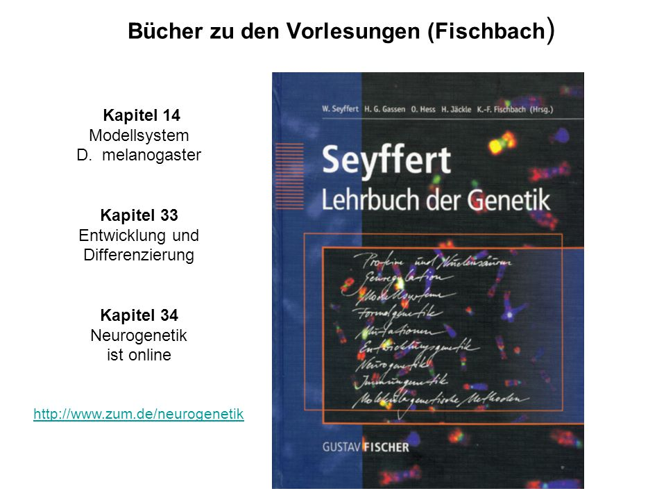 Bücher zu den Vorlesungen (Fischbach)
